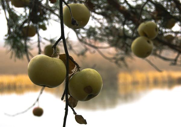 Рождественское яблоко